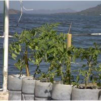 Aquatic Agriculture - Growing Food on Water?!