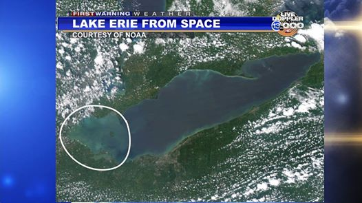 The algae bloom is even visible from space.