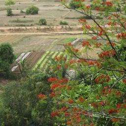 Flashback to Cambodia: Of Land Titling and Land Grabbing
