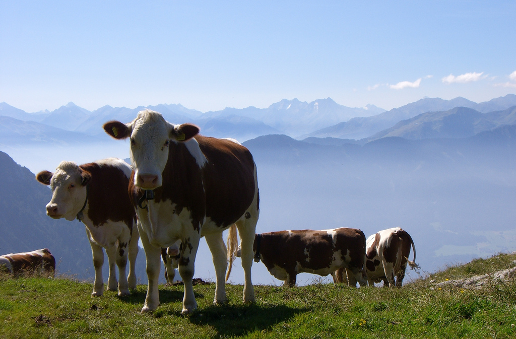 Dairy farmers in Austria, never mind their picturesque setting, are amongst the least efficient and are already heavily subsidized to survive at all. Image by bookhouse boy, via Flickr CC.